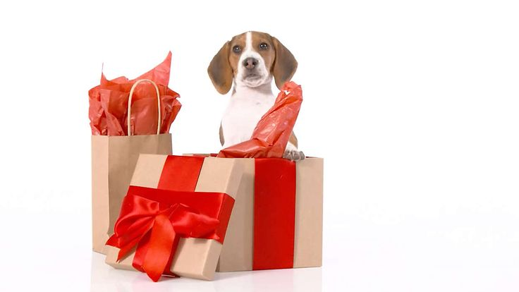 Pet Supplies, Accessories and Products Online at PetSmart