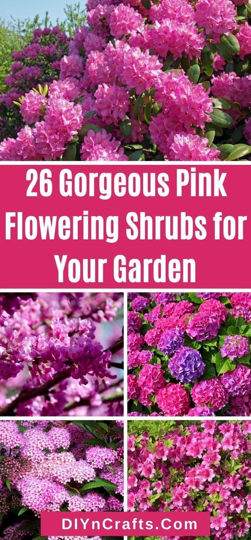 26 Gorgeous Pink Flowering Shrubs For Your Garden Great Ideas In 2020 Flowering Shrubs Garden Great Ideas Shrubs