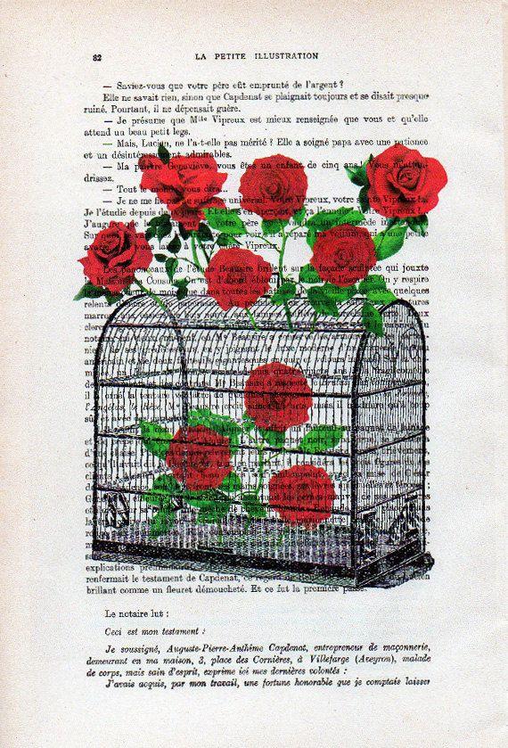 Vogelkooi Rose Anatomie Print op antieke pagina van 1900. De echte antieke papier, die ik gebruik komt uit de jaren 1900 originele antieke Franse boekenpagina. De pagina is ongeveer 7,5 x 11.4(19 x 29 cm). Elke creatie is uniek, ontvangt u de vergelijkbare afbeelding maar op een andere pagina van het antieke papier met inbegrip van de tekenen van de schoonheid door de tijd (vlekken, hoek bochten, ongelijke prenten, enz.). Uw art print zal worden verpakt in een doorzichtige plastic folie m...