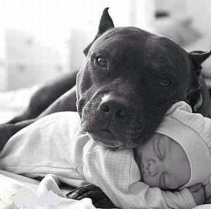 tant d'amour nous donne une belle leçon à nous humains !
