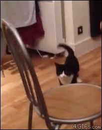I laughed so hard, silly kitty. mine never do anything this funny! what would make a cat hop like that??