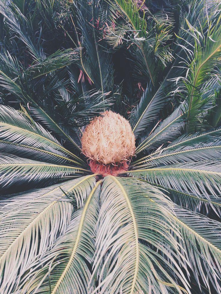 Tropical plant #rome #villadoriapamphilj #palm