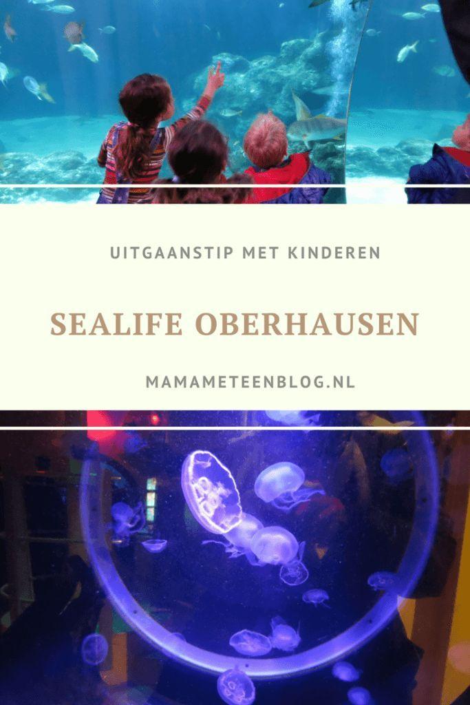 Ontdek Sealife in Oberhausen Uitgaanstip voor kinderen Mamameteenblog #sealife #uitgaanstip #kinderen