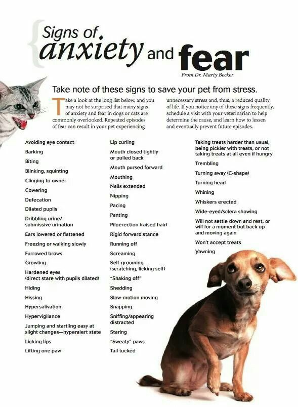 signs of anxiety and fear