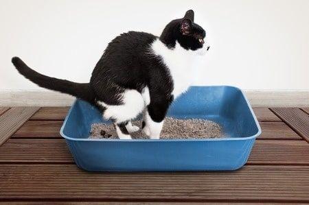 Durchfall bei der Katze - Was tun? - http://www.katzenklo-kaufen.de/durchfall-bei-der-katze-was-tun/