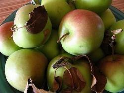 Konijn met appelen en honing, een typisch kerstgerecht