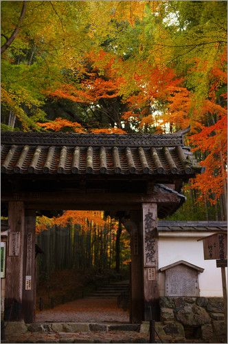 Temple entrance in autumn, Jizo-in. photo poster by Damien Douxchamps favourable to order