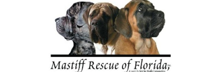 Buying a Dog (Mastiff Rescue of Florida)
