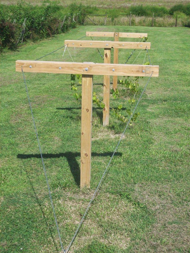 Muscadine trellis home gardening pinterest trellis How to build a trellis