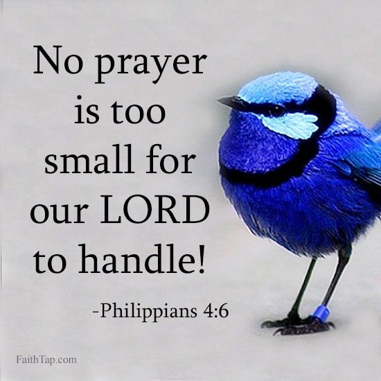 PHILIPPIANS 4:6  -  Be careful for nothing;  but in every thing by prayer and supplication with thanksgiving let your request be made known unto God .  and the peace of God,  which passeth all understanding,  shall keep your hearts and minds through Christ Jesus!