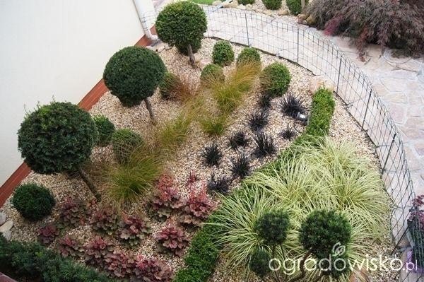 Ogród mały, w cieniu i na ciężkiej glebie - strona 19 - Forum ogrodnicze…