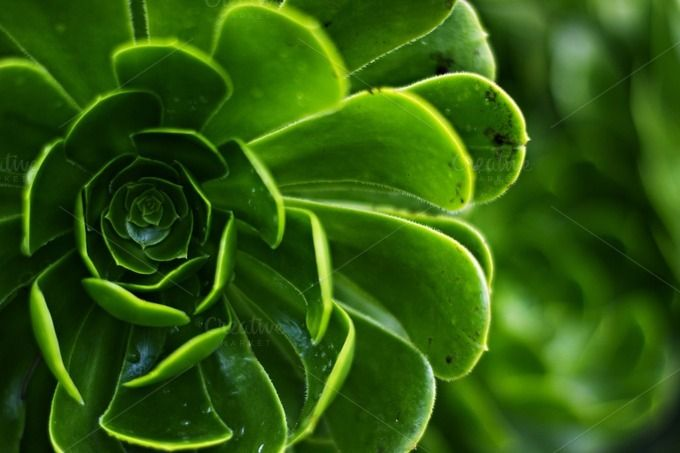 Rich Green Succulents by aurpera on Creative Market