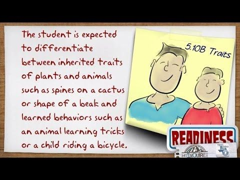 Texas 5th grade Science Readiness Standard 5.10B Inherited Traits and Learned Behaviors, TEKS - YouTube