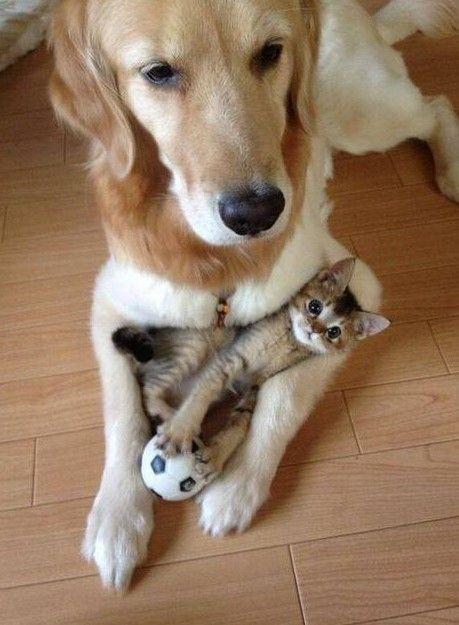 """He is my play buddy my best mate my bodyguard and also my pillow.""......!!!!!! http://ift.tt/2l6ZU95"