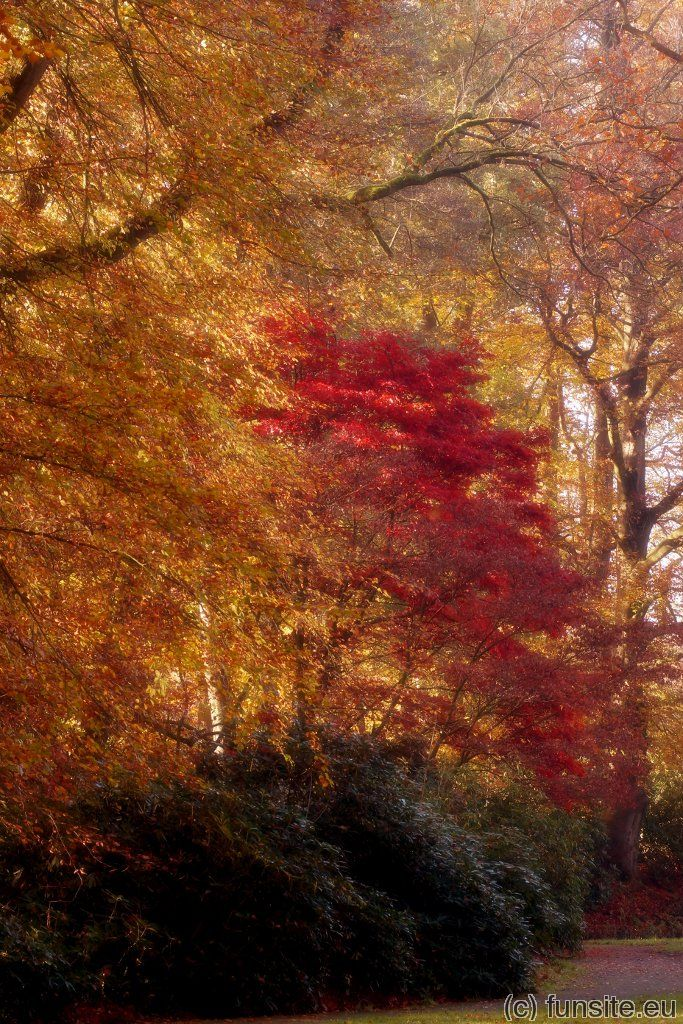 Dreamy red by Gerhard Hoogterp