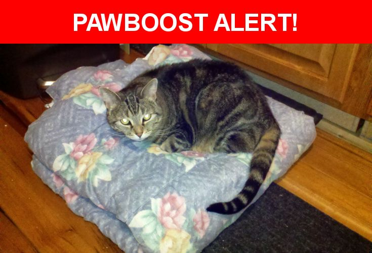 Please spread the word! Paulie was last seen in Agawam, MA 01030.    Nearest Address: Near N Westfield St & Southwick St