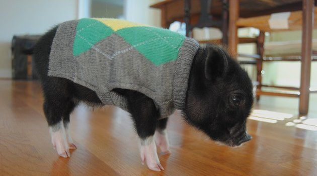 30 Silly Animals in Sweaters That Are Ready for Winter