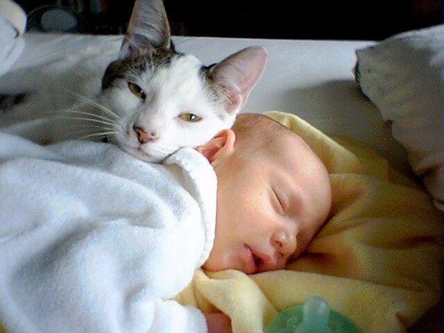 Pesquisa mostra que os donos podem se sentir mais tranquilos e relaxados com a presença de seus animais no quarto