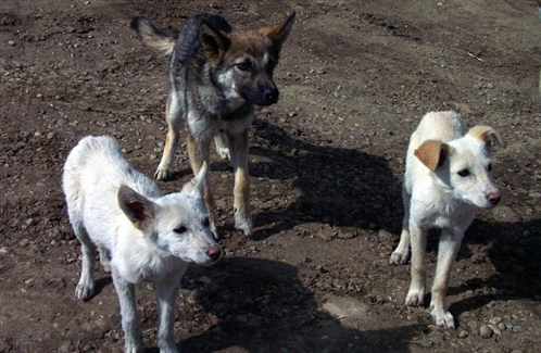 Without foster homes ... stray dogs cannot survive.  www.humaneanimalrescueteam.ca