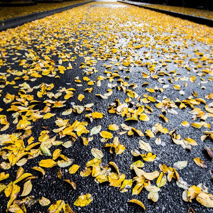 269/365 – 18 Novembre 2012 : Gold on the Sidewalk