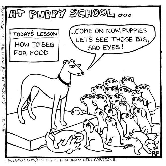Puppy School - Beg For Food, Off The Leash Dog Cartoons by Rupert Fawcett