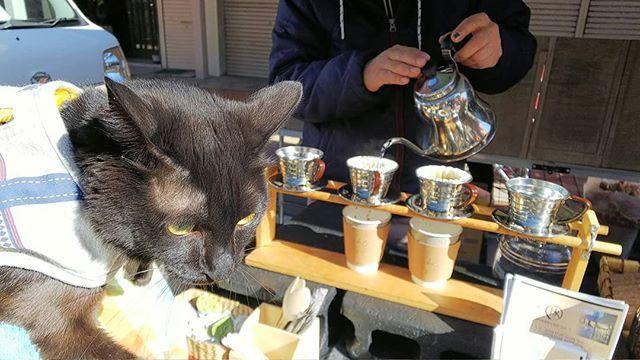 撮影日︰2018年2月4日 ご近所で軽トラ市をやってたから遊びに行ってきたよ🌟 ボクにも何か買ってー  #猫チョコピーカンで猫助け #猫モフー#ねこのきもち #re_petpark #picneko #petpark_winter #ねこ部 #ペットスマイル #ペコねこ部#みんねこ #nekoclub #eclacat #ねこバカ#保護猫 #ねこまみれ #猫好きな人と繋がりたい #world_kawaii_cat  #愛猫#黒猫 #猫部 #にゃんすたぐらむ #ねこすたぐらむ #popo#ポポ#黒猫ポポたん