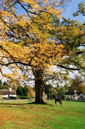 Lyndhurst is one of the most popular villages in the New Forest. There are a couple of excellent hotel options in the area, including and Lime Wood and The Pig in nearby Brockenhurst.