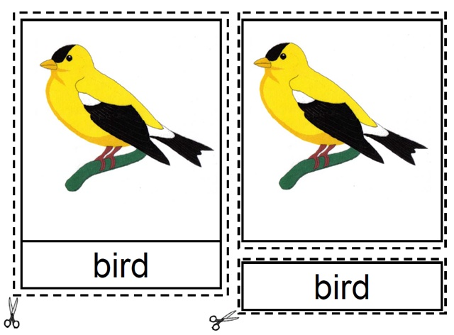 Montesory Materials: learning parts of birds