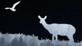Suomen kansalliset luontosymbolit-visailu