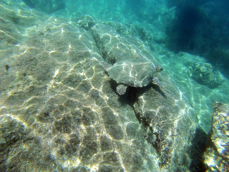 Caretta Caretta sea turtles zakynthos http://seakayakingzakynthos.com/
