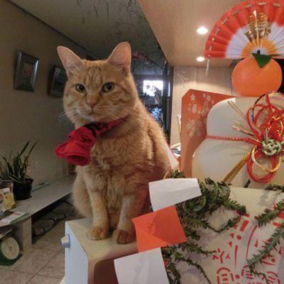 第6位 チュッチュ(ビジネスホテル日新館)全国の宿・ホテルの看板猫