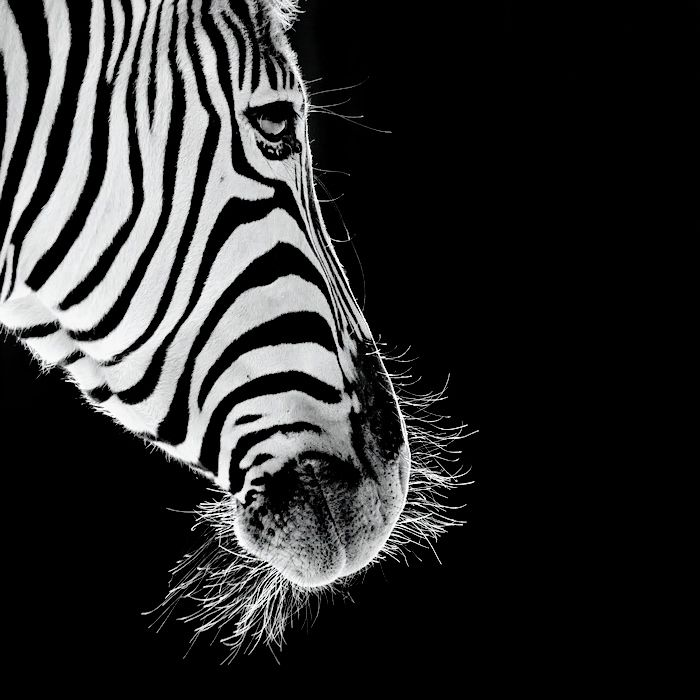 Photograph Equus by Eric Dufour on 500px