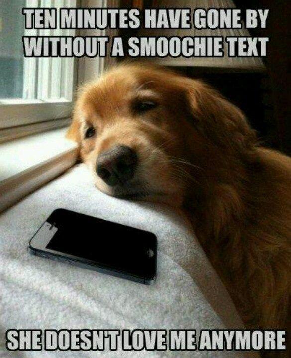 poor doggie, i hope she does #dog #humor