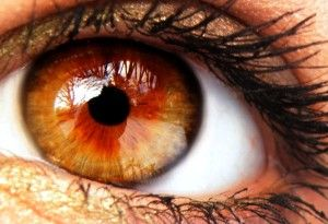 Her eyes were the color of a crisp autumn leaf, a a chestnut red at the center and browning outwards.