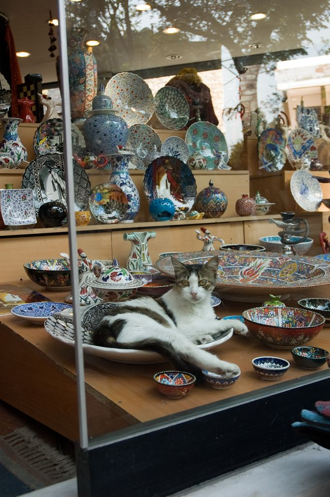 window decoration - cats of istanbul
