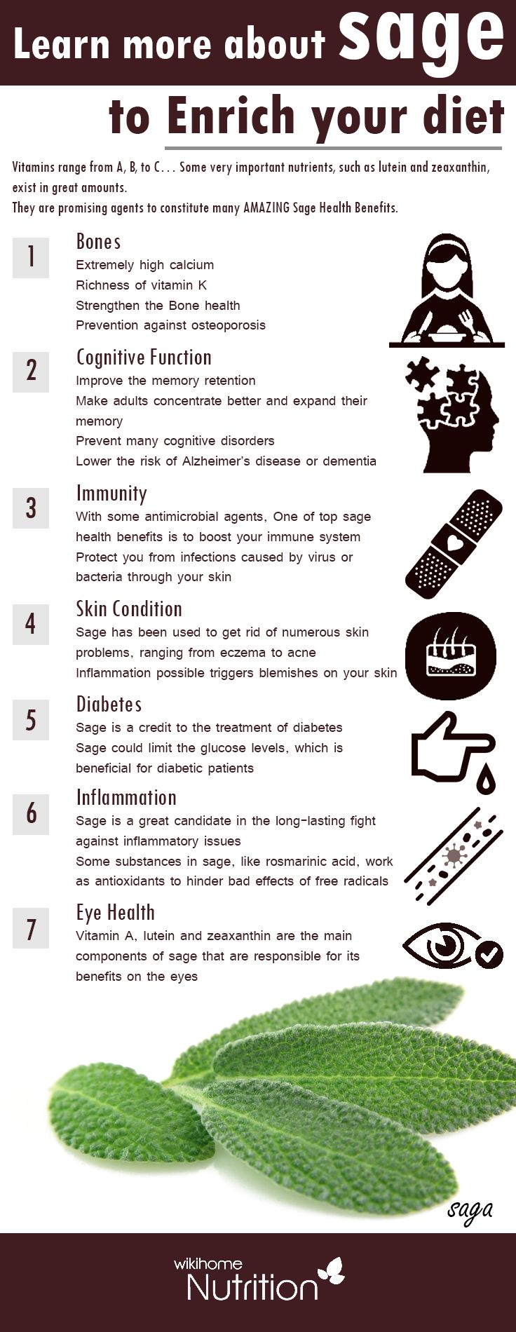 Health Benefits of sage: Vitamins range from A, B, to C… Some very important nutrients, such as lutein and zeaxanthin, exist in great amounts. They are promising agents to constitute many amazing sage health benefits #health #infographic #Boneshealth #Cognitive Function #Immunity #Skin Condition #Diabetes #Inflammation #Eye Health