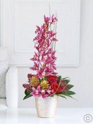 Christmas Orchid Lifestyle Arrangement