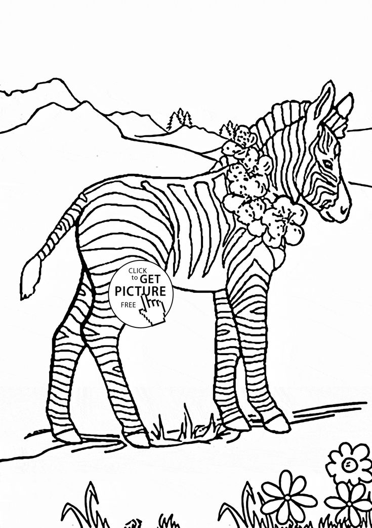Baby Zebra Coloring Page For Kids Animal Pages Printables Free