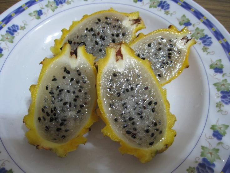 yellow dragon fruit!