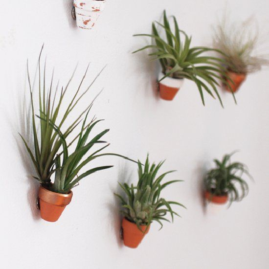 Turn these mini clay pots into magnets - perfect for your air plants!