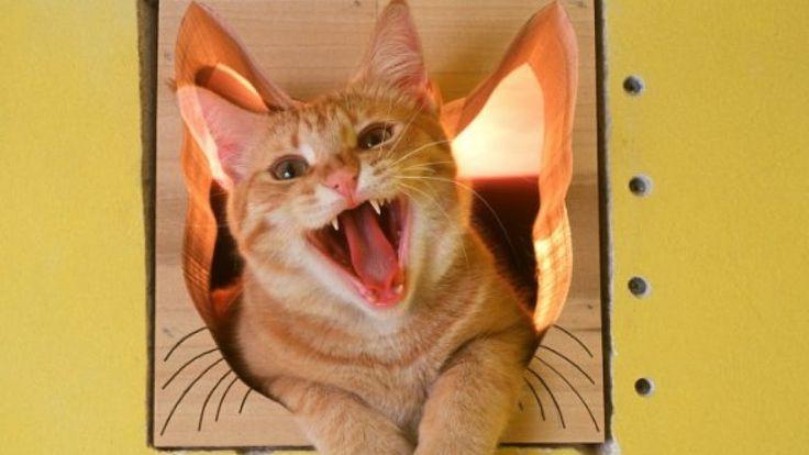 Ideas para hacer camas para gatos y gatitos Increíbles Diseños Y Casas P...
