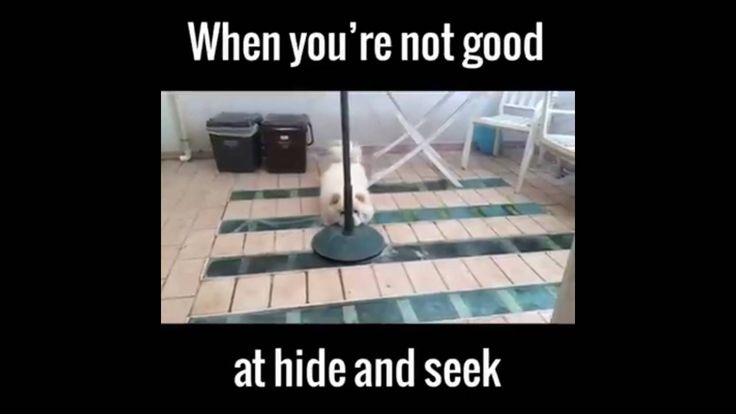 very funny dog play hide and seek,very funny video of a dog play hide an...