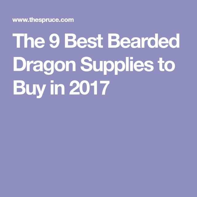 The 9 Best Bearded Dragon Supplies to Buy in 2017