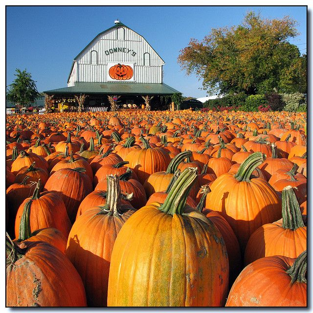 Pumpkins! Downey's farm market and winery in Caledon, ONTARIO - - - | by Lisa-S, via Flickr