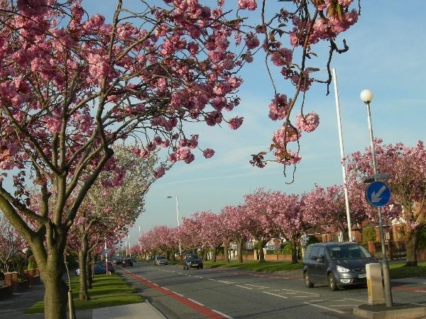 Preston New Road: Southport Mi Hometown