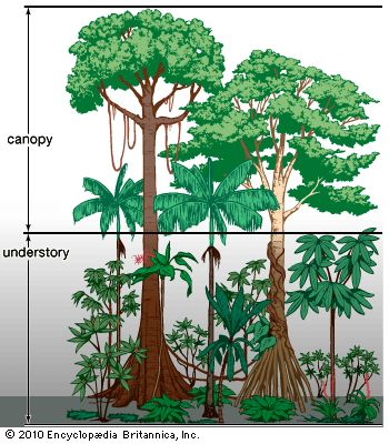 Growing plants homework help