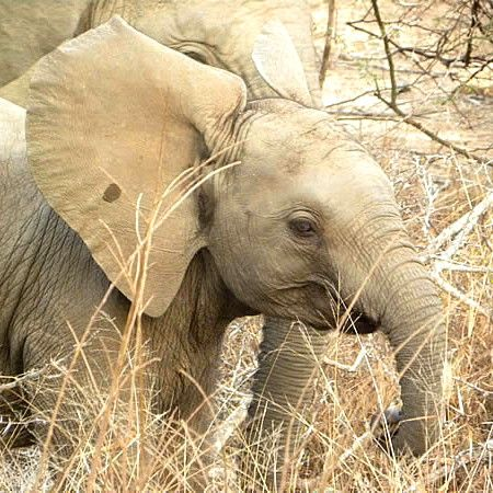 Photo of a baby elephant in a game reserve