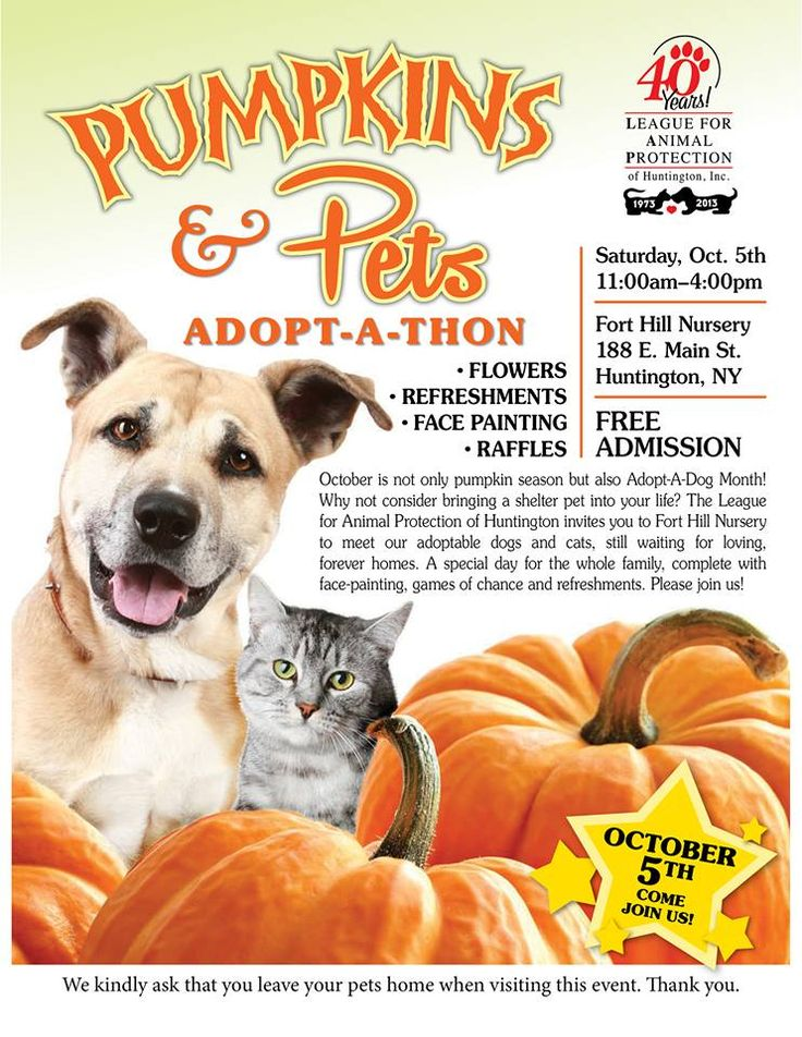 Pumpkin patch pets adoption
