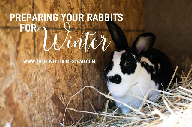 The Fewell Homestead: Preparing Your Rabbits for Winter