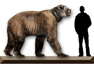 Frontiers of Zoology: Booger Bears